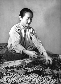 Photo of silk worm farmer, 1981 JiangsuProvince, China.