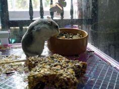 Weekend Photo Theme - Housesitting With Pets - Olga in Leamington Spa