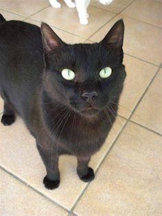 Helfende Hände e.V. - Katze Mojo (EKH 3 Jahre) sucht ein Zuhause | Steckbrief…