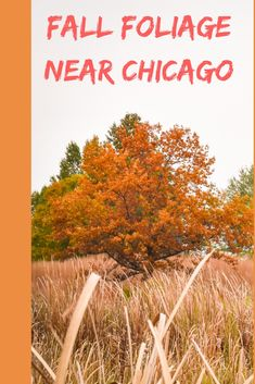 Where to find the best fall foliage near Chicago. [Beautiful trees | #enjoyillinois | #travelillinois | Foliage in Illinois | Fall Travel in Illinois]