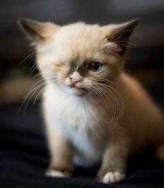 A Blind Kitten Depending On Her One-Eyed Sister Cat