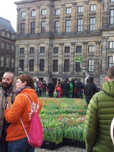 Alle pers te woord staan in de pluktuin op de dam in Amsterdam, wat een opkomst!  Het is weer tijd voor tulpen!
