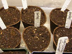 Indoor Seed Starting Tips for Beginners