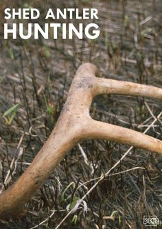 Tips for deer antler shed hunting from the Iowa DNR