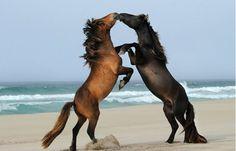 Cavalos selvagens e náufrago (Foto: Reprodução)