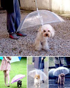 Piyasada Gerçekten Var Olduğuna İnanamayacağınız Çok Tuhaf 17 Ürün - Köpek Şemsiyesi