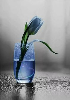Splash Blue