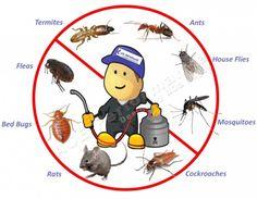 Jasa Pengendalian Pest Control: A. Pest Control (insect control: nyamuk, kecoa, semut, lalat, dll) B. Rodent Control: pengendalian hama tikus. C. Termite Control: pengendalian anti rayap. D. Special Pest: ular, kumbang, kucing, burung, kelelawar, dll.