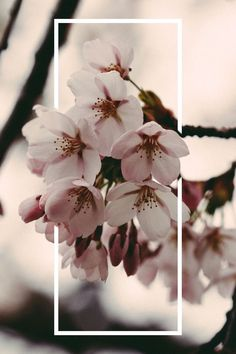 Flowers tumblr background