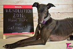 Wordless Wednesday 12/30 - 2016 Resolutions - Tales and Tails