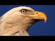 The Eagles...Hotel California