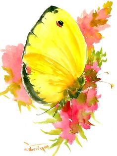 Yellow Butterfly 12 X 9 in, original watercolor painting, by ORIGINALONLY on Etsy