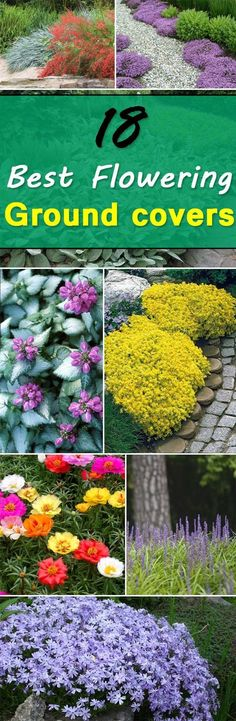 Check out these 18 Flowering Ground Cover Plants - they're not only easy to grow but look beautiful too! | Balcony Garden Web