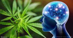 El THC tiene una influencia benéfica en el envejecimiento del cerebro y plantea la posibilidad de que pueda ser útil para el tratamiento de la demencia en los ancianos. http://articulos.mercola.com/sitios/articulos/archivo/2017/05/25/cannabis-ayuda-a-rejuvenecer-el-cerebro.aspx?utm_source=espanl&utm_medium=email&utm_content=art1&utm_campaign=20170525&et_cid=DM144466&et_rid=2018767487