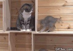 GIF: Cats be like - www.gifsec.com
