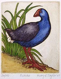 Mary Taylor, b. Devonport, Auckland, New Zealand Lithography. Nz Art, Rare Birds, Bird Drawings, Glass Birds, Stone Painting, Rock Painting, Bird Prints, Fine Art Gallery, Animal Paintings
