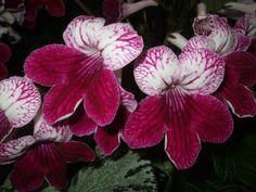 Alternative Eden Exotic Garden: RHS Shades of Autumn Show 2012
