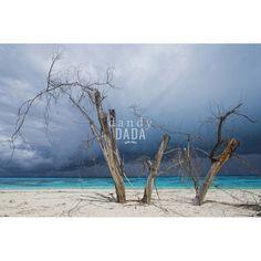 """L'opera """"Seychelles"""" di Piergiorgio Pirrone appartiene alla collezione """"Blue Wave"""". La quiete prima della tempesta. Il sole sfugge alle nubi; la sua fioca luce incipria la spiaggia e i tre tronchi che preludono all'incombente furia tropicale. Solo l'azzurro acceso del mare cristallino ci ricorda la bellezza delle spiaggia delle Seychelles, un museo di storia naturale vivente."""