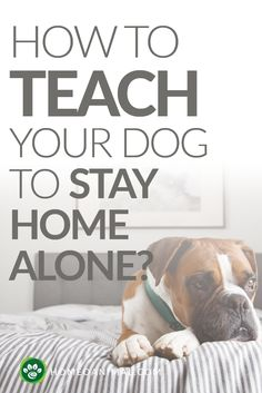 Does having a dog now mean that you'll be stuck at home for the next decade? Teach your dog to be home alone in five easy steps.