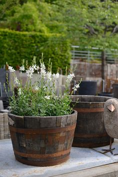 Garden Cottage, Garden Pots, Home And Garden, Container Plants, Container Gardening, Plant Design, Garden Design, Small Courtyards, Colorful Garden