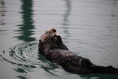 Alaska #1 : La péninsule de Kenai Few Miles Away - http://fewmilesaway.com/alaska-la-peninsule-de-kenai/