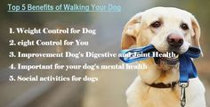 The Benefits of Walking Your Dog Dog Collar With Name, Dog Collar Tags, Custom Dog Collars, Dog Collars & Leashes, Disaster Emergency Kit, Family Friendly Dogs, Learning To Relax, Dog Training Classes, Dog Health Care
