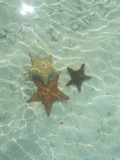 starfish under the sea Catty Noir, Merfolk, Am Meer, Greek Gods, Ocean Life, Kingdom Hearts, Marine Life, Sea Creatures, Under The Sea