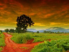 fork in the road, Thailand Overseas Adventure Travel, Adventure Tours, Fork In The Road, The Road Not Taken, Time To Leave, Nature Artwork, Thailand Travel, Places Around The World, Beautiful Beaches