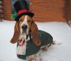 Looking to dress-up your dog for the holidays? Here are 10 different suggestions for everyone from the minimalist to the holiday fanatic.