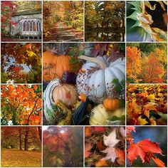 First Day Of Autumn, Autumn Day, Autumn Leaves, Autumn Theme, Autumn Scenes, Autumn Aesthetic, Fall Pictures, Pretty Pictures, Fall Harvest