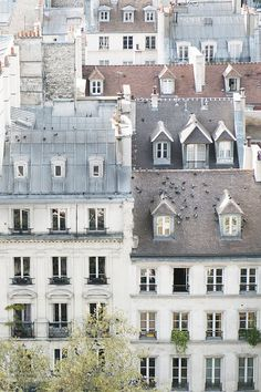 Paris Photography - Birds on a Rooftop in Paris, Cream and Grey, Architecture…
