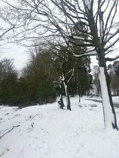 Rd Belfast Castle, Snow, Outdoor, Outdoors, Outdoor Living, Garden, Eyes