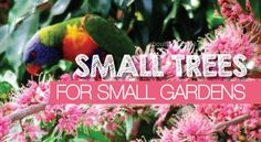 Choose the right small trees for small gardens and backyards.