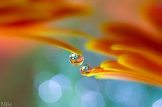 Photograph Come a Little Bit Closer by Miki Asai on 500px