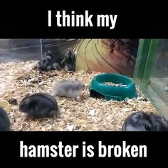 I think my hamster is broken | Funny animal pet gifs