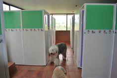 ¿VIDA DE PERROS?En Dogs Resort nuestras mascotas tienen todas las comodidades y lujos... ¿Vida de Perros? (Fotos Nidia Paola Monsalve)