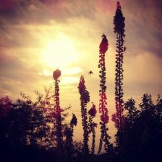 The #Sunset #Krzaczor! #bush #zachodslonca