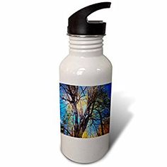 DYLAN SEIBOLD - PHOTOGRAPHY - SUN CATCHING TREE - Flip Straw 21oz Water Bottle (wb_245694_2)  by 3dRose LLC  Link: