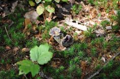 scouting sites - forest floor | Flickr - Photo Sharing!
