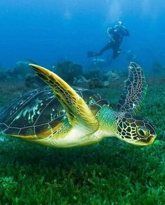 Happy #WorldWildLifeDay 🌊 Today we celebrate the beauty of Saint Lucia and our beloved variety of sea creatures: 🐬Dolphin 🐢Sea turtle 🐠Fish 🦀Crab 🐙Octopus We continue to call the Sea our home. 📷 scubastlucia #SaintLucia #LetHerInspireYou Wildlife Day, Saint Lucia, Sea Creatures, Octopus, Dolphins, Turtle, Fish, World, Happy