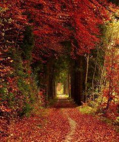 warme Herbstfarben im Wald