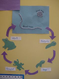 toad / frog life cycle - like how they show the difference between frog and toad eggs with googly eyes