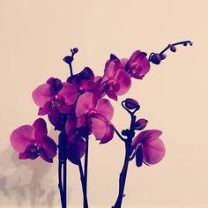 #orchid #flower #simple #beauty Orchids, Simple, Flowers, Plants, Beauty, Beautiful, Beleza, Lilies, Flora