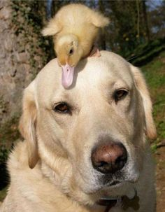 animal_friendships_10