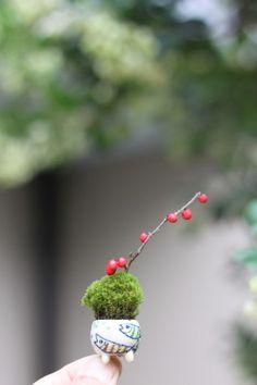 tiny #garden #pot