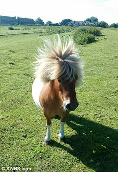 Bobby, a 12-year-old Shetland Pony, was found dead with gruesome injuries after going miss...