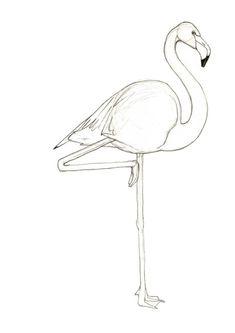 Inspired Picture of Flamingo Coloring Pages . Flamingo Coloring Pages Pink Flamingo Drawing At Getdrawings Free For Personal Use Flamingo Png, Flamingo Vector, Pink Flamingos, Cool Coloring Pages, Coloring Pages To Print, Free Printable Coloring Pages, Flamingo Coloring Page, Butterfly Coloring Page, How To Draw Flamingo
