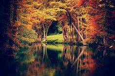 Texas Landscape Photography - Autumn Foliage - Cypress Trees - Nature - Hill Country - Guadalupe River by slightclutter on Etsy https://www.etsy.com/listing/211744242/texas-landscape-photography-autumn