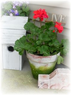 Geraniums always remind me of my grandmother...she always had red ones on her front porch. Always buy them for my pots.