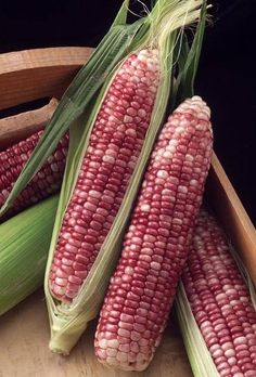 vegtables from the new world - corn Fruit And Veg, Fruits And Vegetables, Fresh Fruit, Photo Fruit, Glass Gem Corn, Exotic Fruit, Harvest Time, Sweet Corn, Food Art
